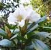 murow_btn_ogrod_botaniczny.png