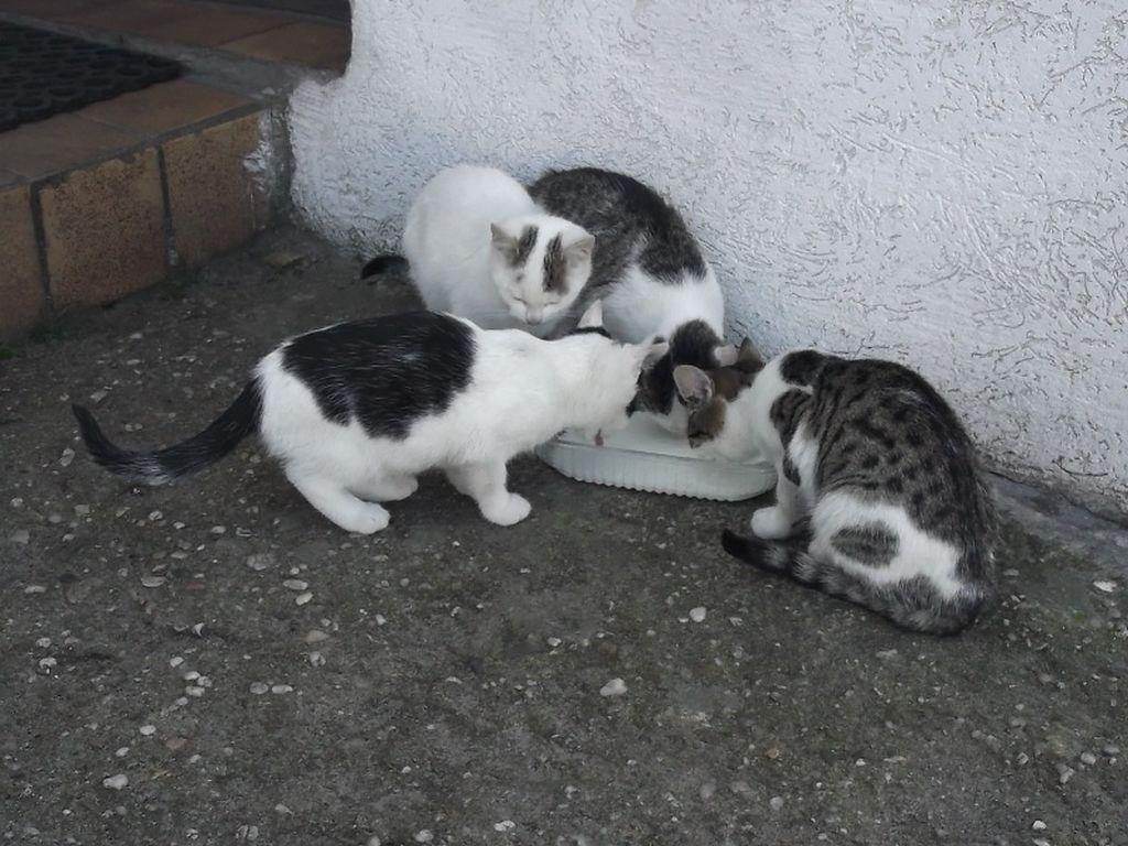 Koty w Murowie_28.10.13r [Rozdzielczość Pulpitu].jpeg