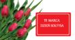 bukiet czerwonych tulipanów na białym tle oraz czerwona tabliczka z napisem 11 MARCA DZIEŃ SOŁTYSA